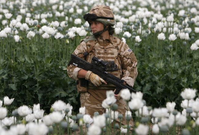 poppy_field_in_musa_qala__helmand_province